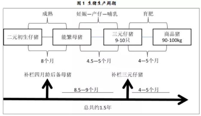 生猪期货基本面分析2.jpg